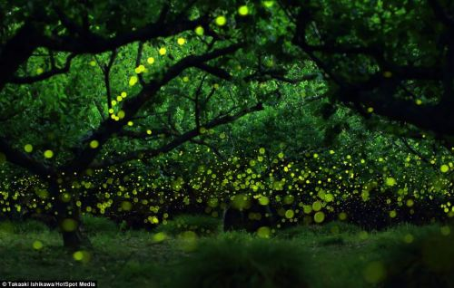 phosphorescentblobs