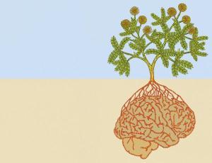 plant-brain